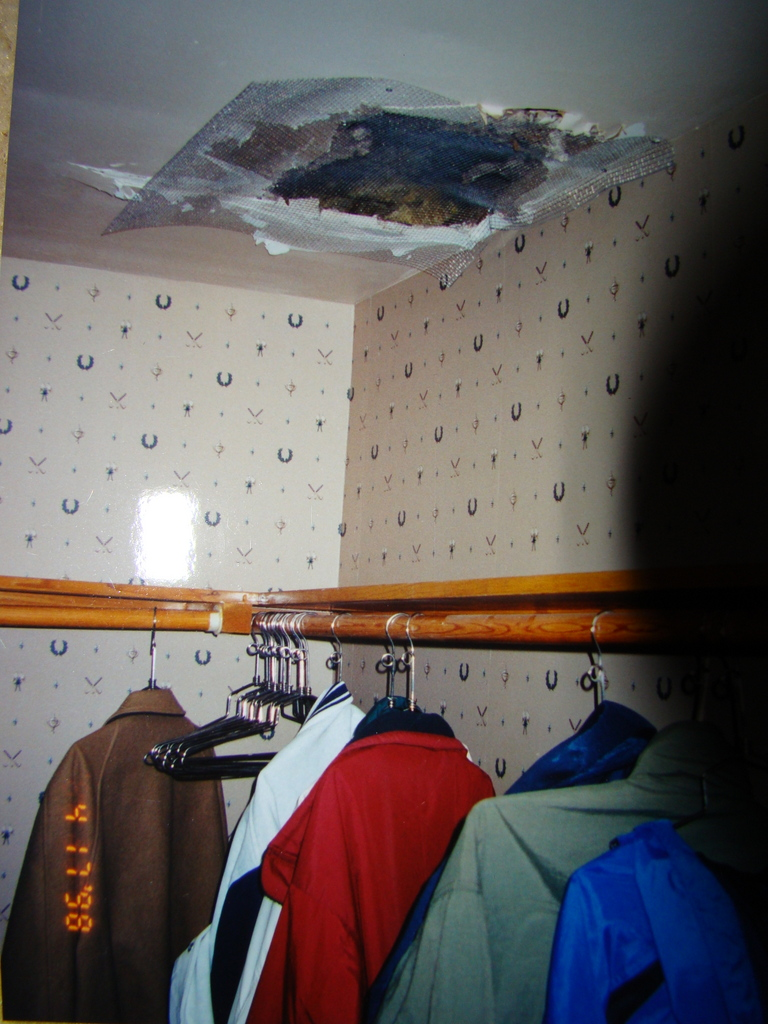 Raccoons toilet in the same area and ceiling gave way & Animal Identification and Behaviors u2013 Animal Removal Service